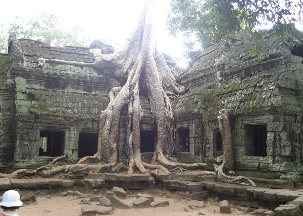 Top 10 bezienswaardigheden Siem Reap: Ta Prohm tempel